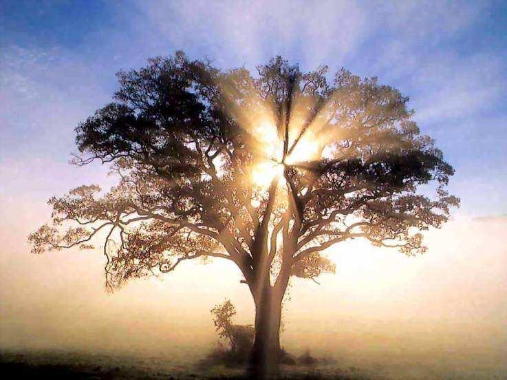 Wanamey árbol De La Vida Espiritualidad