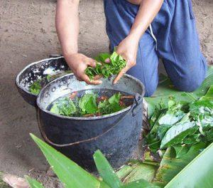 Preparación Ayahuasca
