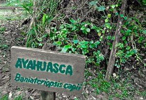 ayahuasca-ceremonias