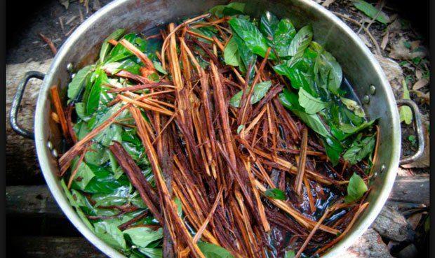 El ayahuasquero: Las dinámicas socio-ecológicas del chamanismo Ese Eja