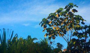 espiritualidad-ayahuasca