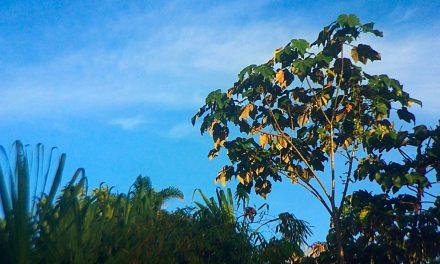 Reflexión sobre la naturaleza y la cultura frente al desarrollo