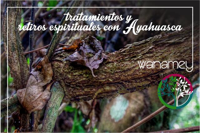Tratamientos y retiros espirituales con Ayahuasca en Cusco