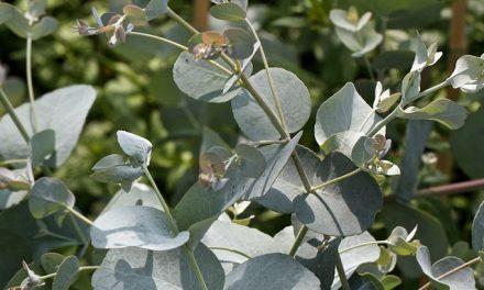 Cómo usar las plantas para sanar enfermedades