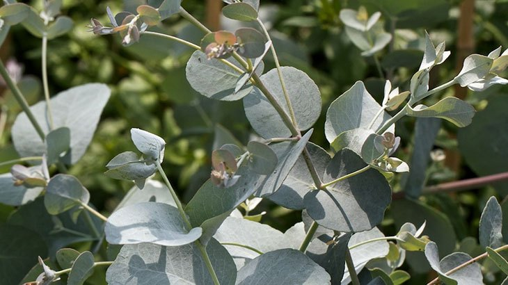 Propiedades y usos de plantas medicinales espiritualidad for Planta decorativa con propiedades medicinales