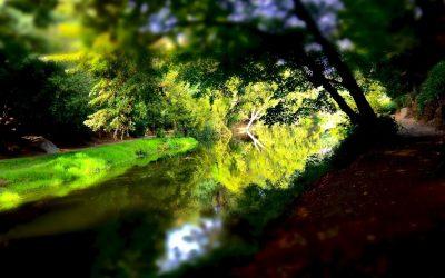 Retiros Espirituales y Dietas con Ayahuasca en la Selva