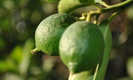 Plantas Medicinales Propiedades