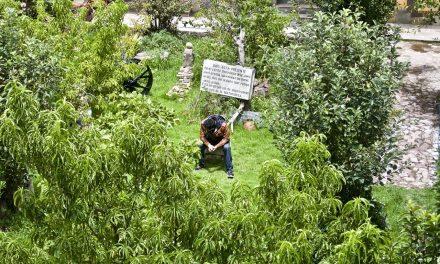 La Ayahuasca: no es un evento para disfrutar