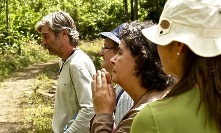 Ayahuasca: Los Espíritus Guardianes de las Plantas Maestras