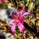 Plantas sagradas: tradición de los pueblos indígenas
