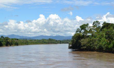 Mito del Wanamey el Árbol de la Vida