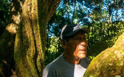 Ayahuasca: la práctica shamánica del maestro