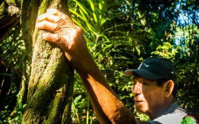 Información de la Ayahuasca: efectos, dosis, usos e historia