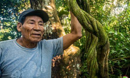 Propiedades y usos de la Ayahuasca