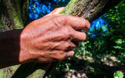 ¿Por qué es importante la Ayahuasca?