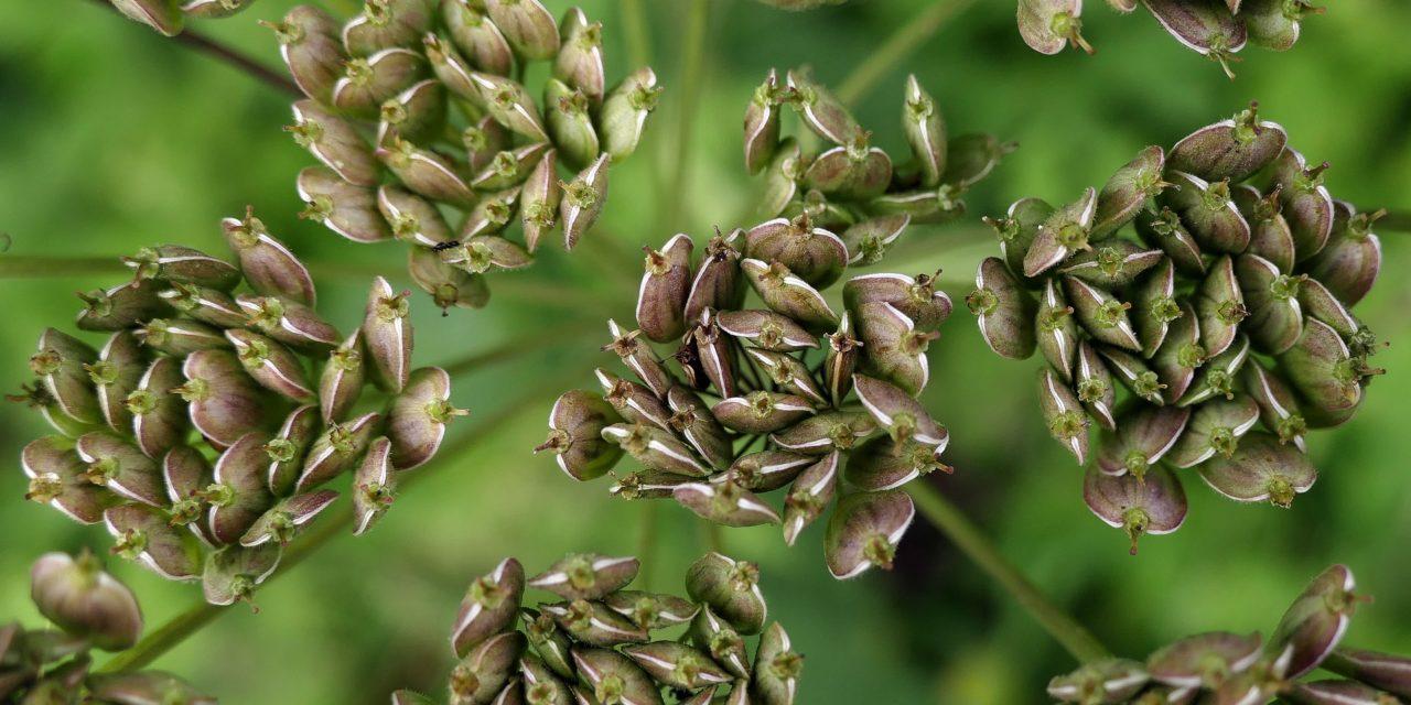 Plantas Medicinales Aplicaciones
