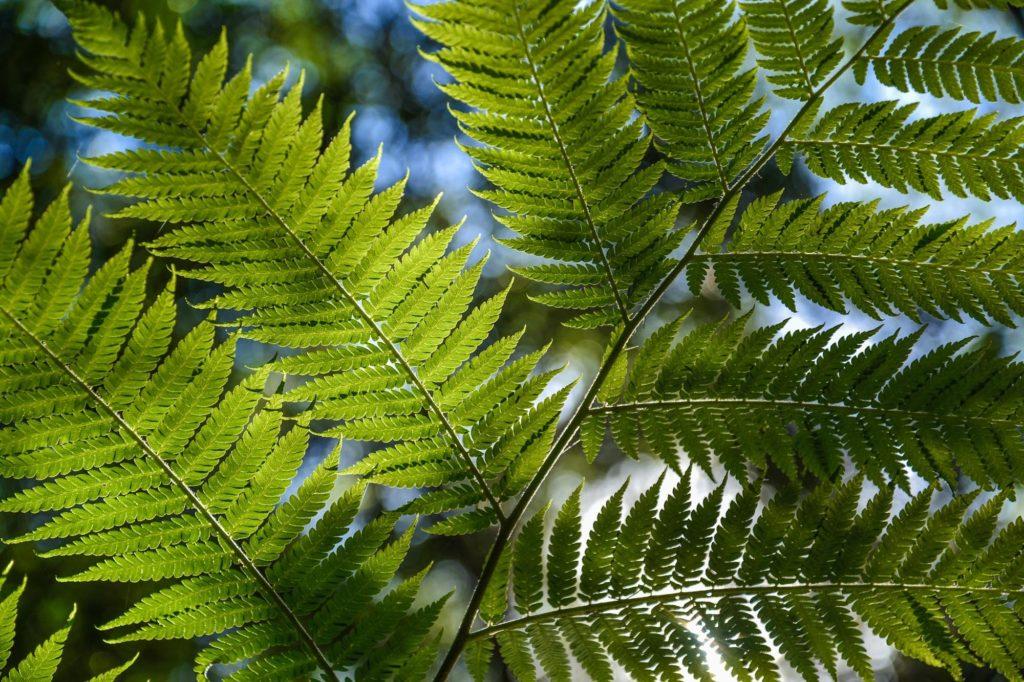 Plantas de la selva de Perú