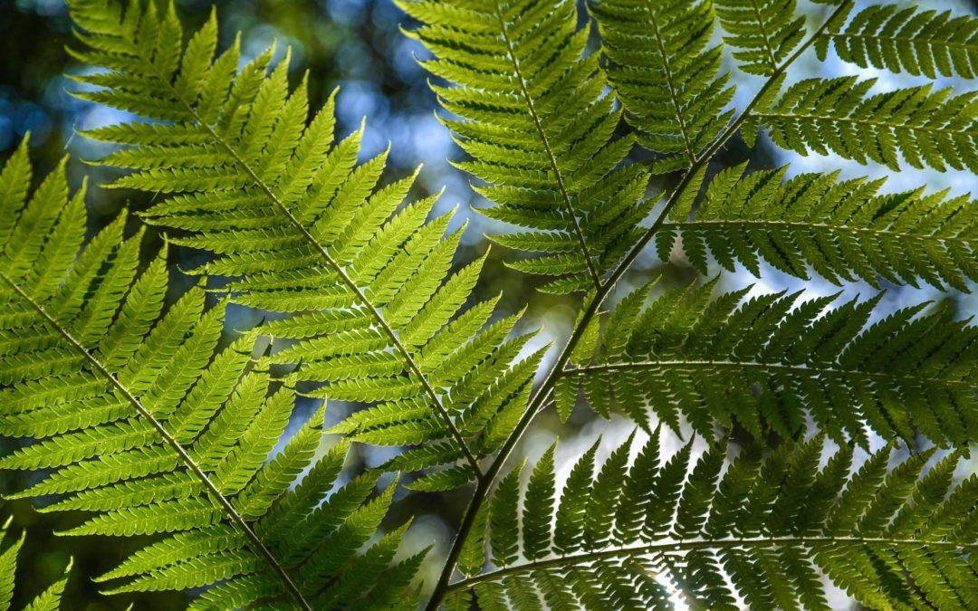 Plantas Medicinales de la Selva de Perú