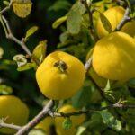 Las plantas que sanan enfermedades